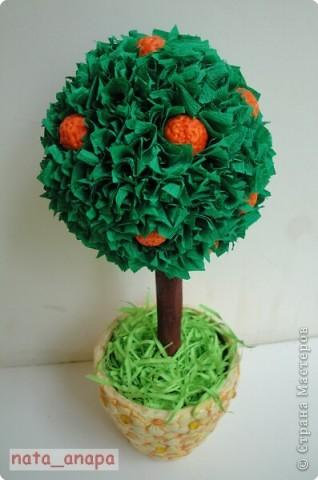 Вот и я вырастила апельсиновое деревце. Апельсины из солёного теста.  Спасибо STRENFLEX https://stranamasterov.ru/user/25077 за МК! фото 1