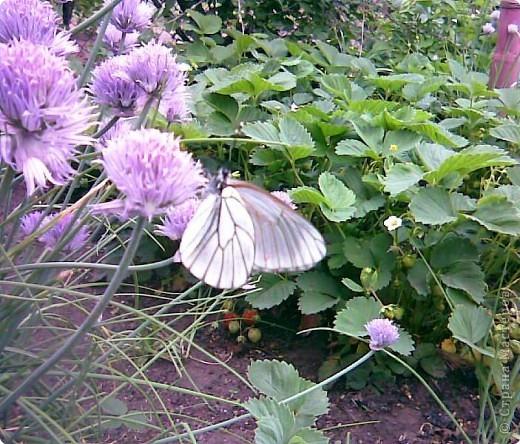 бабочки...