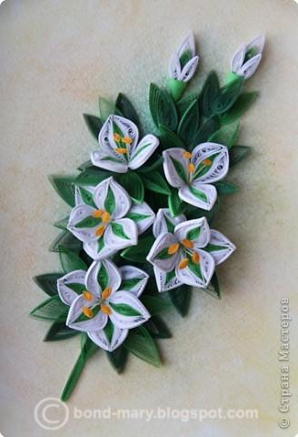 Всем привет! :) Сегодня я к вам с работой по квиллингу. Сделала эту работу как подарок к юбилею папы, он у нас любит лилии. фото 5