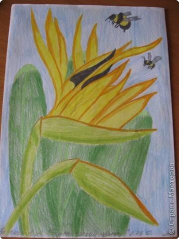 Мастер класс цветными карандашами подробно #9
