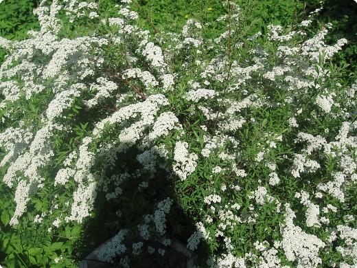 Такая веселая хрюшка поселилась в моем цветике. фото 5