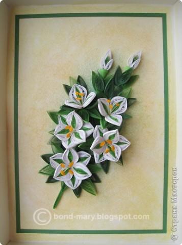 Всем привет! :) Сегодня я к вам с работой по квиллингу. Сделала эту работу как подарок к юбилею папы, он у нас любит лилии. фото 1
