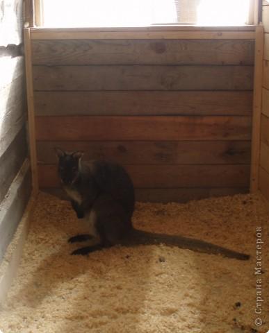 зимой ездили в наш зоопарк, нашла фото решила выставить,конечно здесь не все животные выставлены , просто много фото получились не очень  страус фото 10