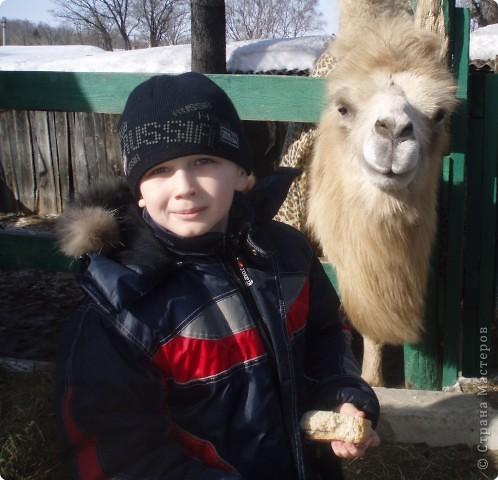 зимой ездили в наш зоопарк, нашла фото решила выставить,конечно здесь не все животные выставлены , просто много фото получились не очень  страус фото 12