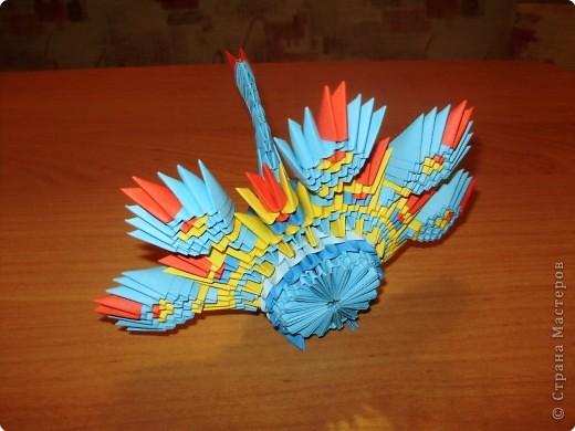 Оригами модульное: Павлинчик. фото 3