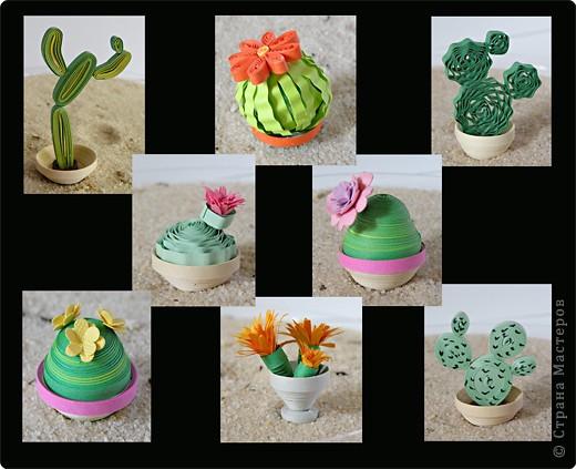 Квиллинг: Коллекция кактусов фото 5