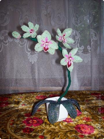 Бисероплетение Орхидея