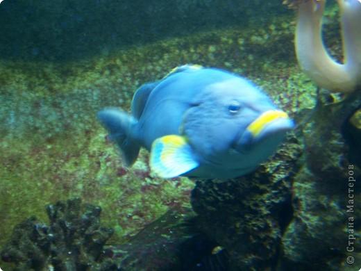 Аквариумы Зоопарка Вильгельма фото 4