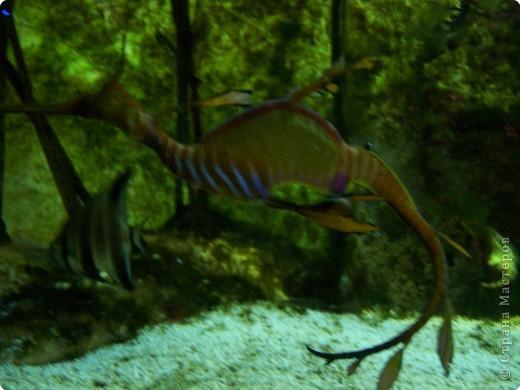 Аквариумы Зоопарка Вильгельма фото 6