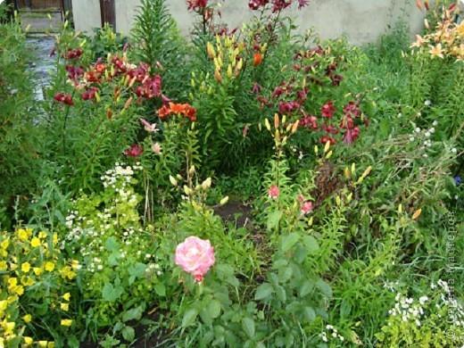 Приглашаю в гости в мой сад фото 6