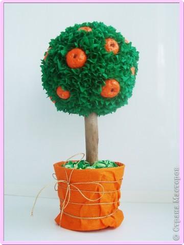 Апельсиновенькое деревце  фото 1