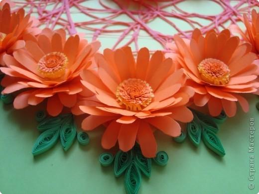 Расцвели в моём цветнике календулы. фото 2