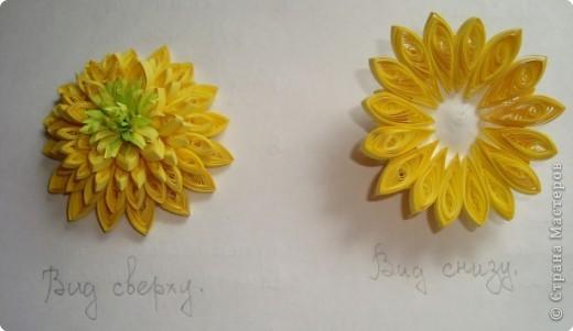 """Долго я думала как собрать цветы в форме шара.Думала я думала и наконец придумала! Но об этом чуть ниже.Решила я опробовать своё """" изобретение"""" на цветке золотой шар, научное название РУДБЕКИЯ. фото 6"""