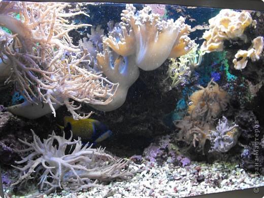 Аквариумы Зоопарка Вильгельма фото 11