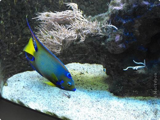 Аквариумы Зоопарка Вильгельма фото 15