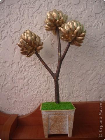 На отдыхе сделала куме сувенирчик после поедания фисташек. Это уже моё второе фисташковое деревце, но первое не успела сфотографировать-сразу ушло в подарок. фото 1