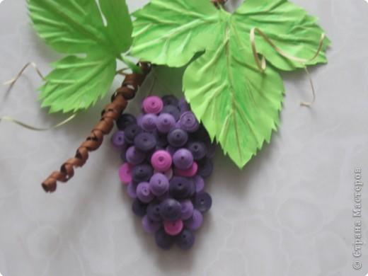 плантацию винограда