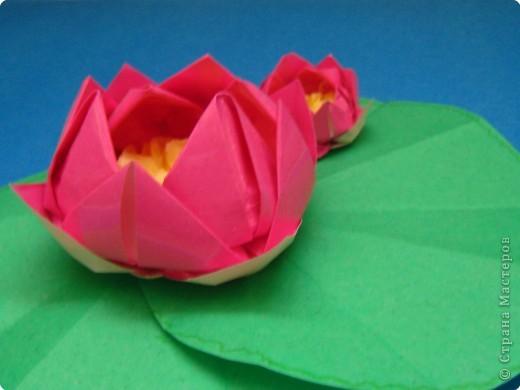 Оригами Кувшинка Бумага