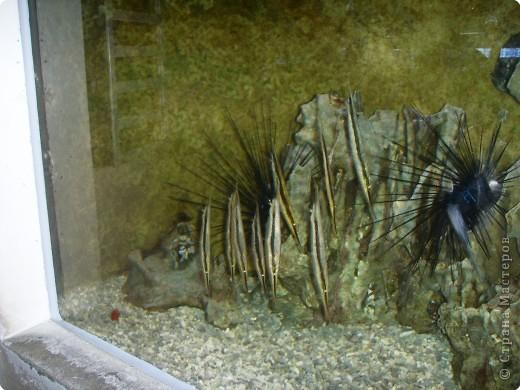 Аквариумы Зоопарка Вильгельма фото 21