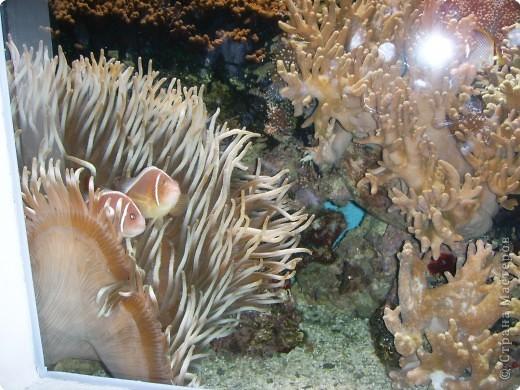 Аквариумы Зоопарка Вильгельма фото 24