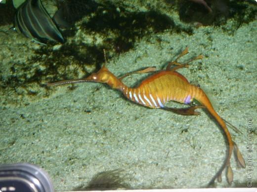 Аквариумы Зоопарка Вильгельма фото 7