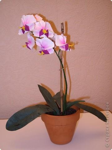 Орхидея Бумага фото 2