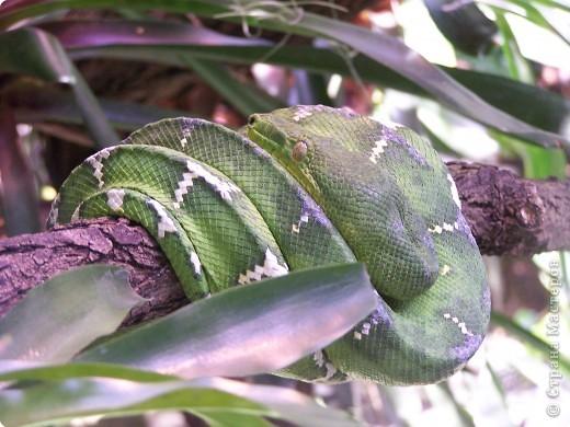 Змейки фото 2