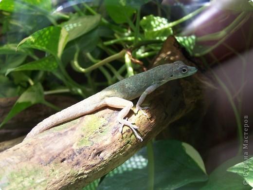 Змейки фото 9