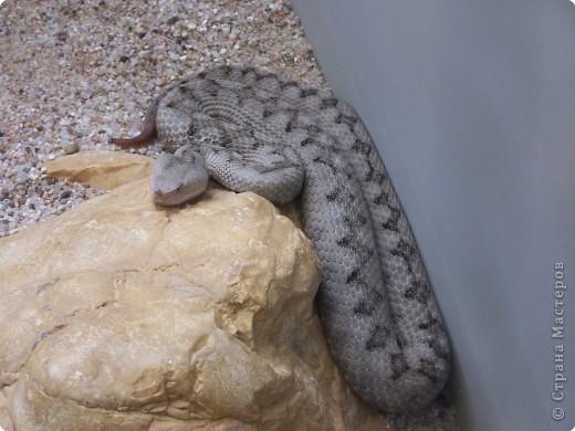 Змейки фото 3