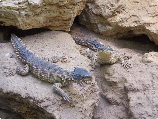 Змейки фото 12