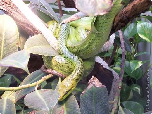 Змейки фото 5