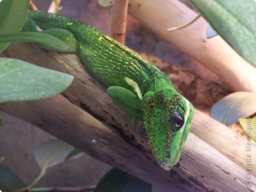 Змейки фото 10