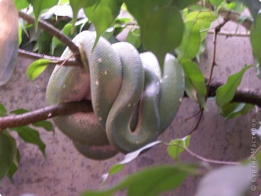 Змейки фото 7