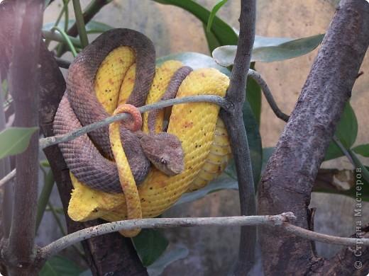 Змейки фото 1