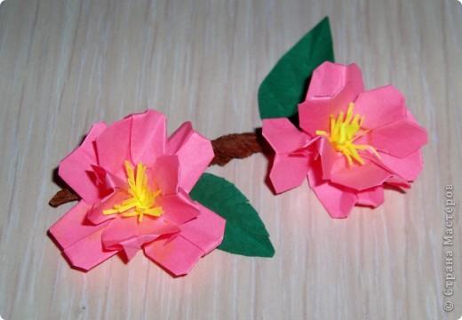 "МК-оригами ""Цветы сакуры или"