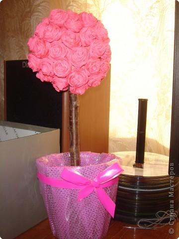 Розовое дерево. фото 2