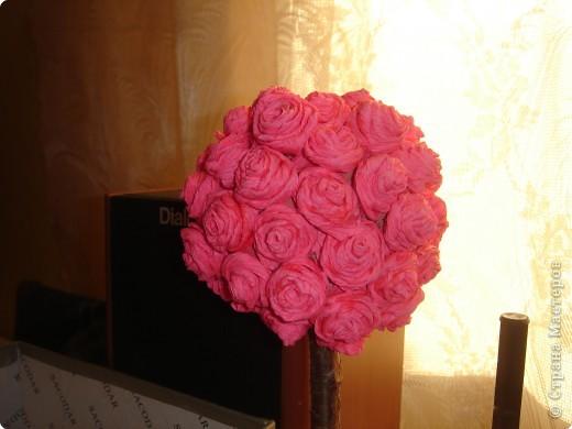 Розовое дерево. фото 3