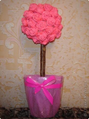 Розовое дерево. фото 1
