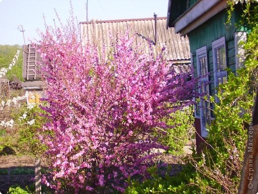 Вся наша красота весна сакура цветет