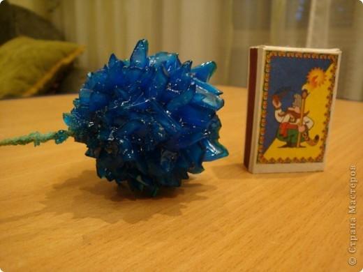 Поделка изделие Выращенные мною кристаллы Соль фото 6