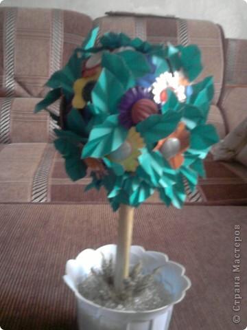 Пуговичное дерево фото 1