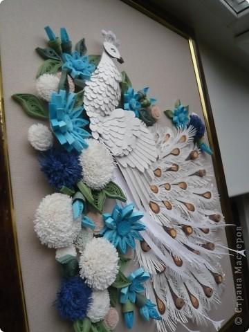 Вдохновленная увиденными в Стране Мастеров работами  Юлены, Ольги Ольшак и других мастериц  сделала подобного павлина. Совместила две техники - бумагопластику и квиллинг. Очень понравилось делать птичку, а с цветами кажется переборщила фото 4