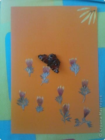 вот такая вот летняя полянка, бабочка настоящая засушенная. вначале лета бабушка подарила Максиму сачок (всё лето бегал ловил всех насекомых) фото 1