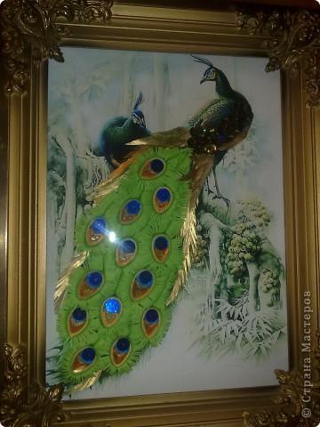 райские птицы фото 2