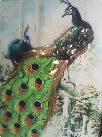 райские птицы фото 3