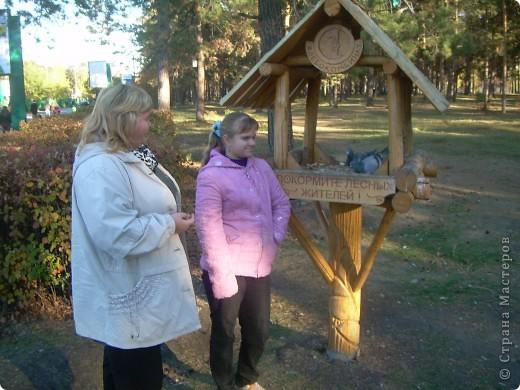 По всему парку расположены такие кормушки для птиц. фото 1