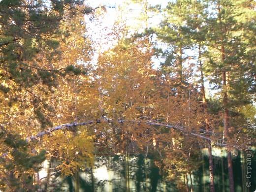 По всему парку расположены такие кормушки для птиц. фото 11