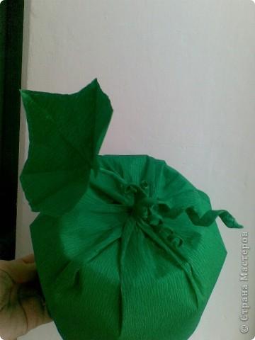 А вот и наша шапочка огурчика. фото 2