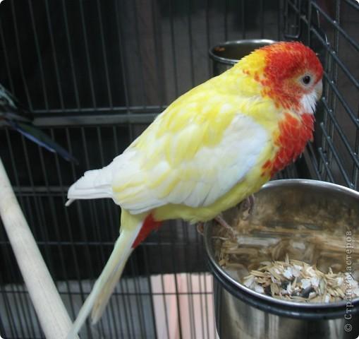 Сегодня мы приглашаем всех посетить выставку попугаев и экзотических птиц. Думаю, что писать здесь что-то об этих замечательных созданиях нет смысла. Просто смотрите и любуйтесь их окраской) фото 2