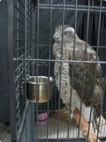 Сегодня мы приглашаем всех посетить выставку попугаев и экзотических птиц. Думаю, что писать здесь что-то об этих замечательных созданиях нет смысла. Просто смотрите и любуйтесь их окраской) фото 14